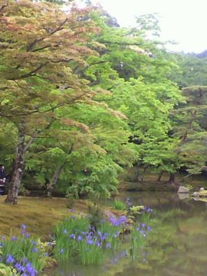 鹿苑寺の庭園、みどりがきれいですよ♪