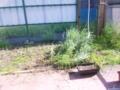草刈りしてみた。90リットルのごみ袋2つ分。それでもまだまだ残ってる