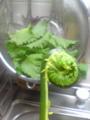 「こごみ」という初めて見る野菜