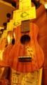 渋谷の楽器屋さん。ウクレレが一本ほしいな〜♪ 私、似合うと思う。