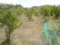 今日は朝6時から草刈り (σ´∀`)σ 樹海と化としていたのが嘘のよう♪