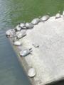 京都なう。ヤクザみたいな人に梅干し買わされた(^〇 ^)亀だらけ