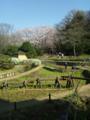 水もぬるんで、ウグイス鳴いて。穏やかなお花見日和の久良岐公園。 #y