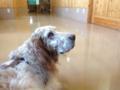 動物病院待合室にて、ポーラの待ち方。横になっている。