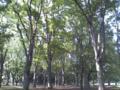小金井公園。素敵なところです。人も少なくて、穏やかな時間が流れて