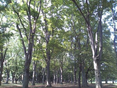 小金井公園。素敵なところです。人も少なくて、ゆったり。豊かで穏や
