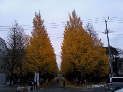 秋やなぁ〜 @慶応