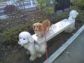 ん?これは、犬用のベンチ?。 Google→検索「ゼンララちゃん」楽しい