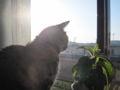 おはようございます。 朝陽が出て 少し暖かい雰囲気… でも、寒いです