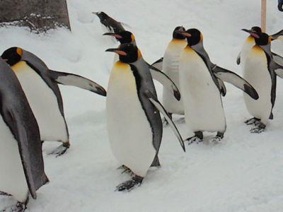 旭山動物園なう。この動物園は本当に素晴らしい。効率性をまるで考え