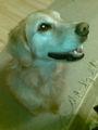 誕生日おめでとうフィリーネ、7歳だね。