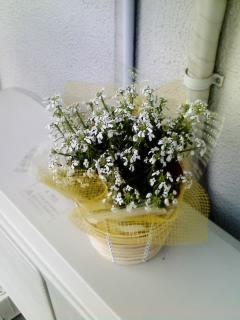 かーちゃんへのプレゼントでスノーコーンの花を購入したぜ。