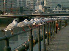 私はまだ御茶ノ水で仕事中ですが相方は桜木町でカモメ桟橋見たそうで