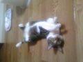 うちのサロンの看板猫