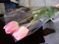 どうにも切り花は似合う気がしなくて悩んで、チューリップにした。こ