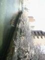 物流学会に行く途中で、門前仲町の桜。船乗りたいなあ。