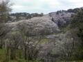 今日は蓮花寺でお花見!のどかだなぁ。