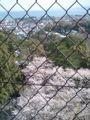 小田原城の天守閣から地上の桜を見下ろしなう 人がゴミのようだ!(