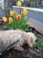 春ですねぇ