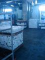 豊海地区冷蔵庫。眠いにゃぁ。