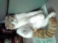 実家の猫。いやぁ〜ん