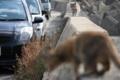 波止場の猫