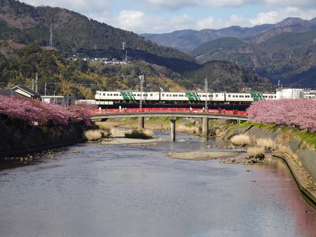 河津川を渡る185系踊り子107号伊豆急下田行き(2020/2/11)