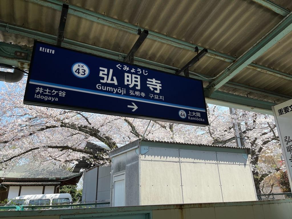 弘明寺駅下り1番線の駅名標と、弘明寺観音付近の満開の桜(2021/3/27)