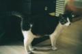 [M3][Summicron50mmF2][Kodak][Kodak160VC]