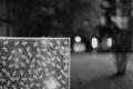 [Zeiss Ikon ZM][C-Sonnar T* 50mm F1.5][Kodak Gold100]