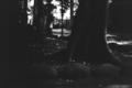 [M3][Summicron50mmF2][Kodak Gold]