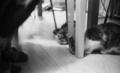 [M6][Nokton35mmF1.4][Kodak TX400]