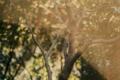 [M3][Zeiss-Opton Sonnar 50mm F1.5][Solaris]