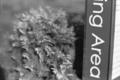 [BESSA R3A][Heliar 75mm F1.8][Fuji NEOPAN100]