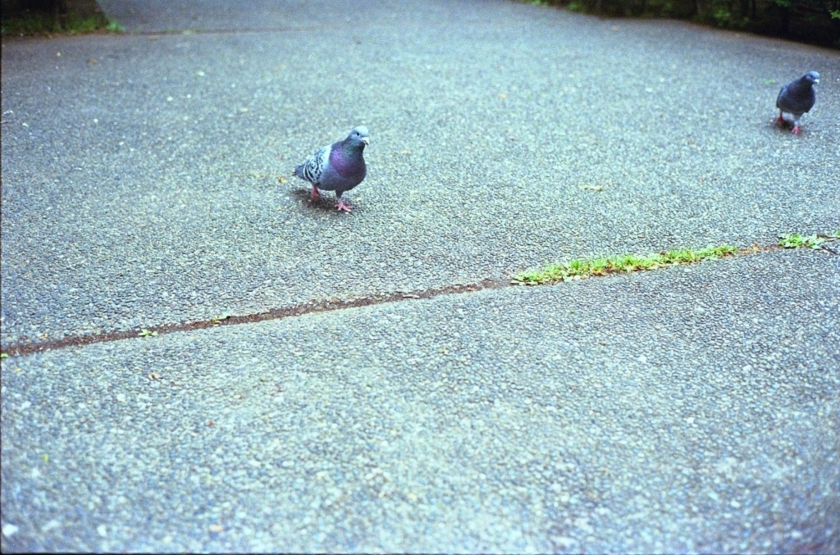 [minolta CLE][Summicron-C 40mm F2][Kodak GC400]