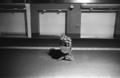 [BESSA R4A][Ultron28mmF2][Kodak T-MAX]
