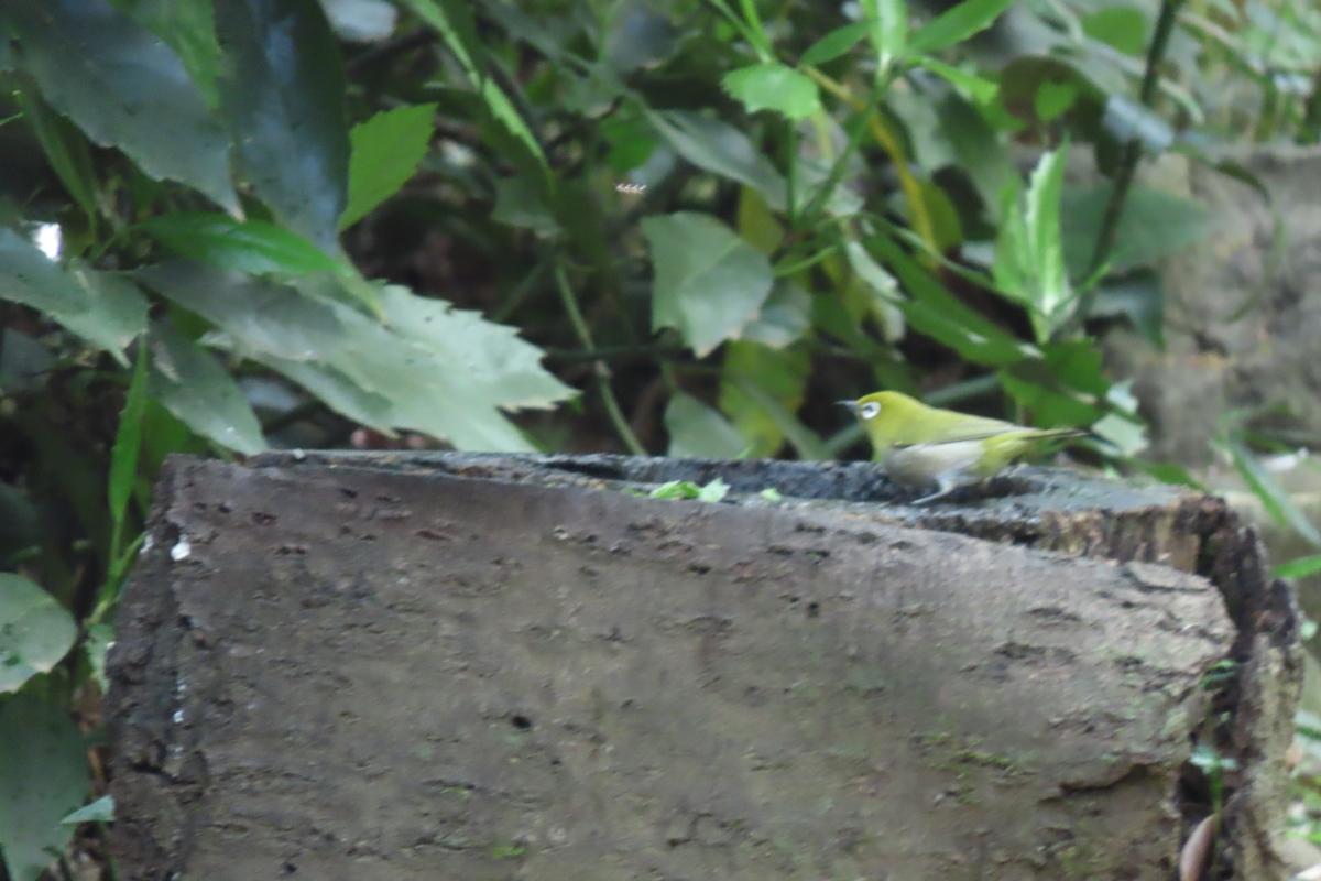 f:id:tyuugakusei_birder:20210411152535j:plain