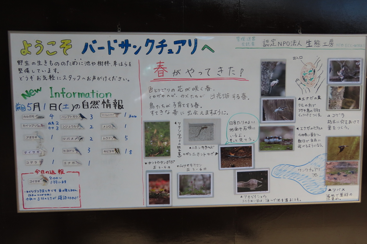 f:id:tyuugakusei_birder:20210502121821j:plain