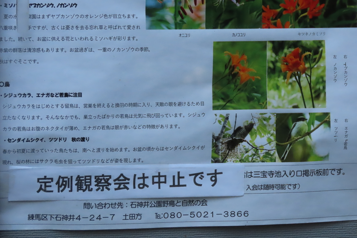 f:id:tyuugakusei_birder:20210801133657j:plain