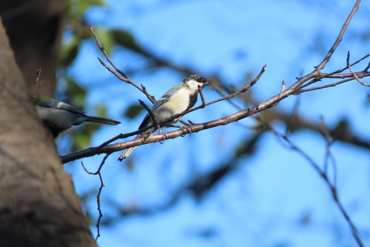 f:id:tyuugakusei_birder:20210920122853j:plain