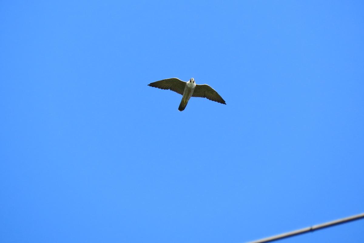f:id:tyuugakusei_birder:20210920123234j:plain