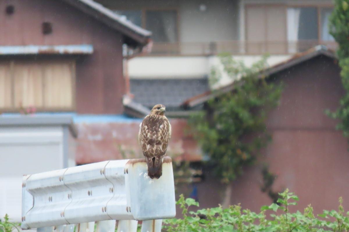 f:id:tyuugakusei_birder:20211014175447j:plain