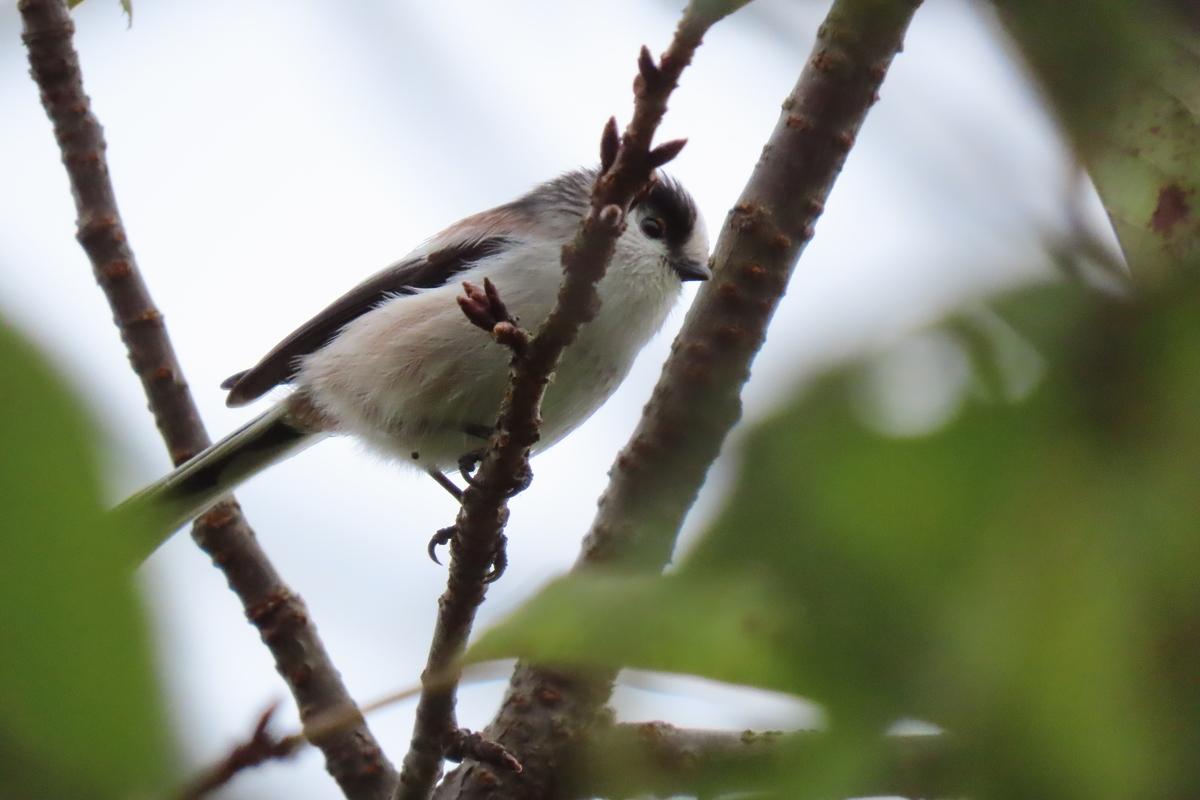 f:id:tyuugakusei_birder:20211014181459j:plain