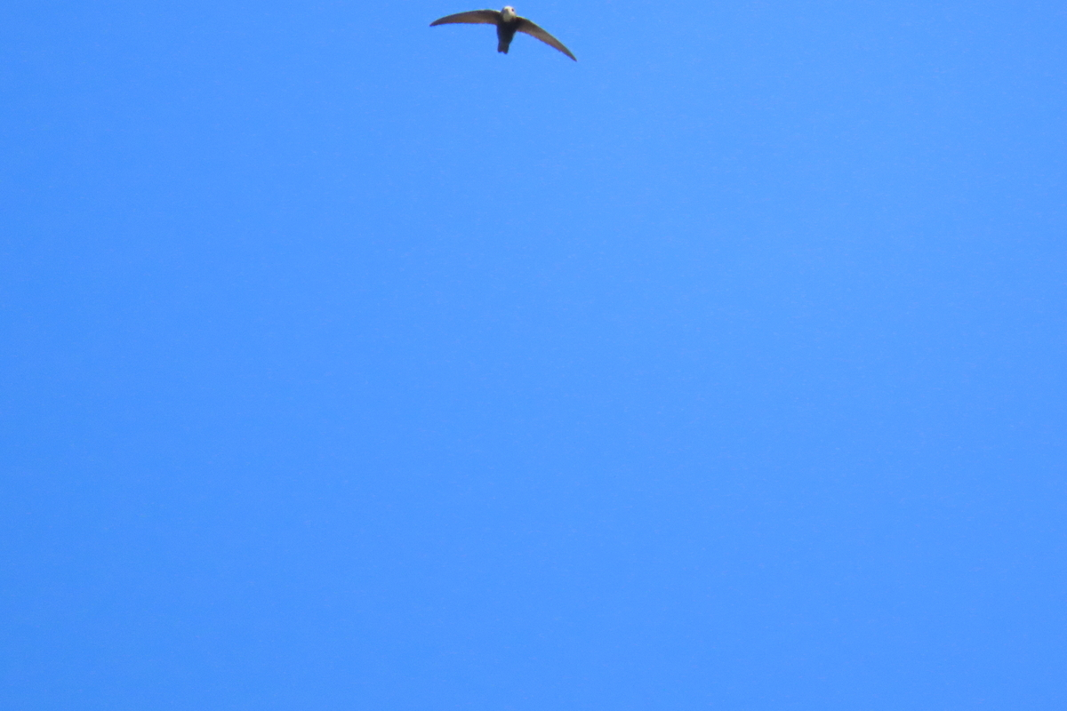 f:id:tyuugakusei_birder:20211024193536j:plain