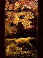 『京都新聞写真コンテスト』 秋の日差しを浴びて