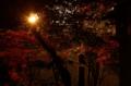 京都新聞写真コンテスト 逆光のモミジ