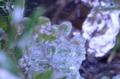 『京都新聞写真コンテスト 氷の造形 』
