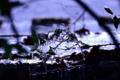 『京都新聞写真コンテスト 凍てつく世界』