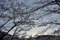 『京都新聞写真コンテスト  夜明けの空』