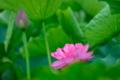 『京都新聞写真コンテスト  微睡(まどろ)む花』